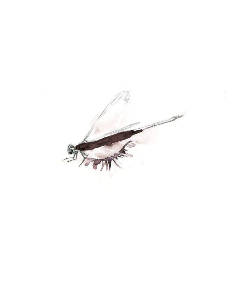 Acuarela de un ojo cerrado con una libélula dibujada a lápiz